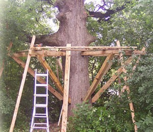 Partial Build Tree House Construction